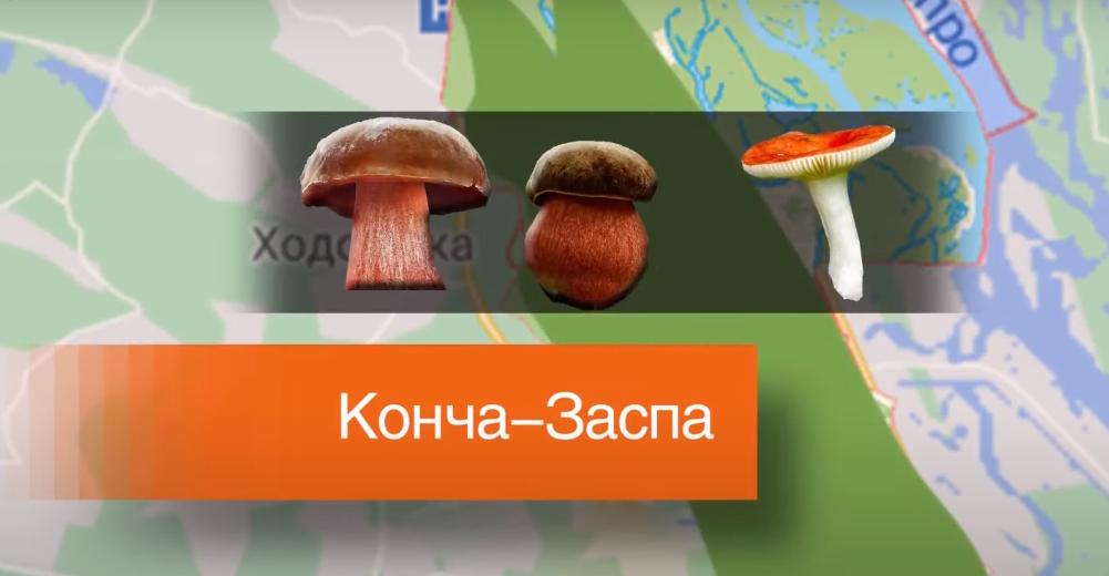 ТОП-7 грибних місць Київщини